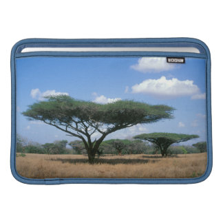 Acacia de la espina del paraguas (tortilis) del funda macbook air
