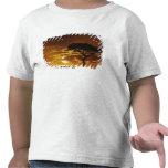 Acacia de la espina del paraguas, tortilis del camisetas