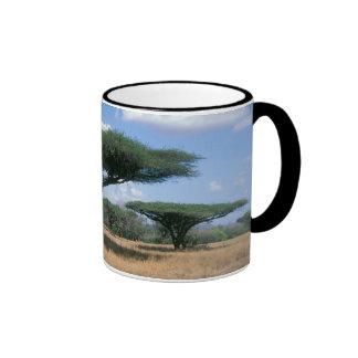 Acacia de la espina del paraguas tortilis del taza de café