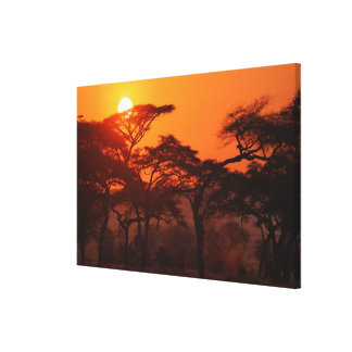 Acacia forest silhouetted at sunset, Tarangire Canvas Print