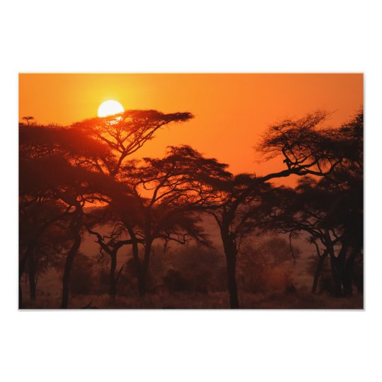 Acacia forest silhouetted at sunset, Tarangire Photo Print