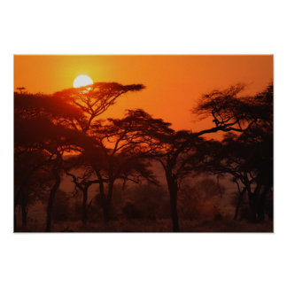 Acacia forest silhouetted at sunset, Tarangire Poster
