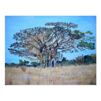 Acacia galpinii Postcard