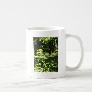 Acacia joven del árbol joven taza clásica