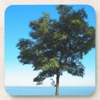 Acacia solo del árbol en las orillas del mar posavasos de bebida