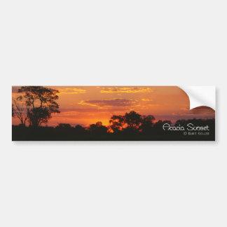 Acacia Sunset Bumper Sticker