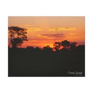 Acacia Sunset Canvas Print