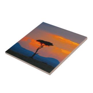 Acacia y puesta del sol sobre la teja de Mara del