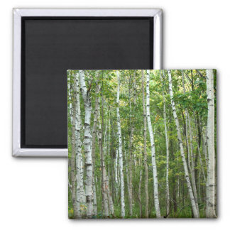 Acadia Birches 2 Inch Square Magnet