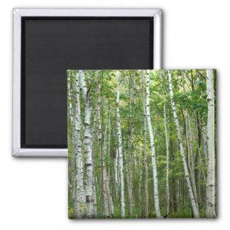 Acadia Birches Fridge Magnet