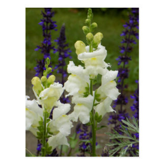 Acadia Flowers Postcard
