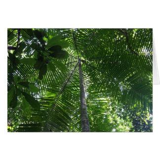 Acai palm tree card
