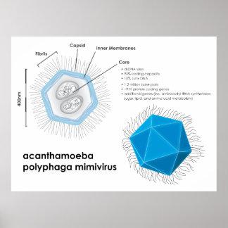 Acanthamoeba polyphaga mimivirus APMV Diagram Poster