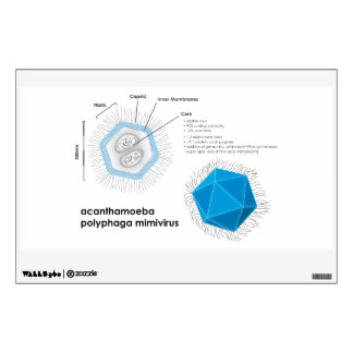 Acanthamoeba polyphaga mimivirus APMV Diagram Wall Decal