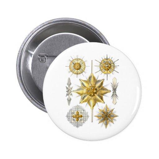 Acanthometra Pinback Button