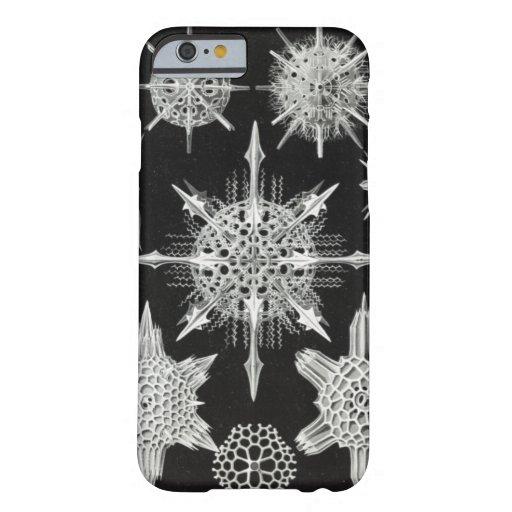 Acanthophracta, Wunderstrahlinge Aquatic Animal Barely There iPhone 6 Case