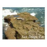 Acantilados en San Diego, CA Tarjetas Postales