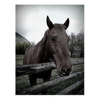 ¡Acaricíeme por favor! Trate el caballo con Postal