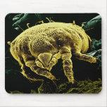 Ácaro microscópico Lorryia Formosa de Acari del ar Alfombrilla De Raton