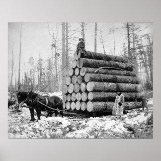 Acarreo de una carga de Logs, 1908. Foto del Póster