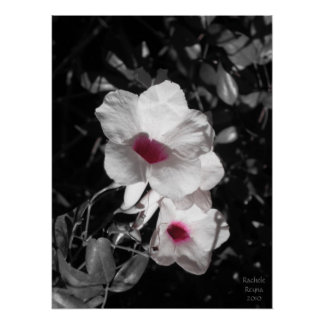 Accenting Beauty Poster