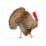 Acción de gracias a todo color Turquía Postal
