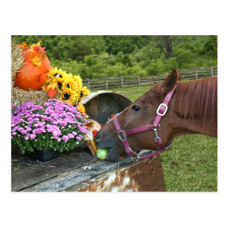 Acción de gracias del caballo postal