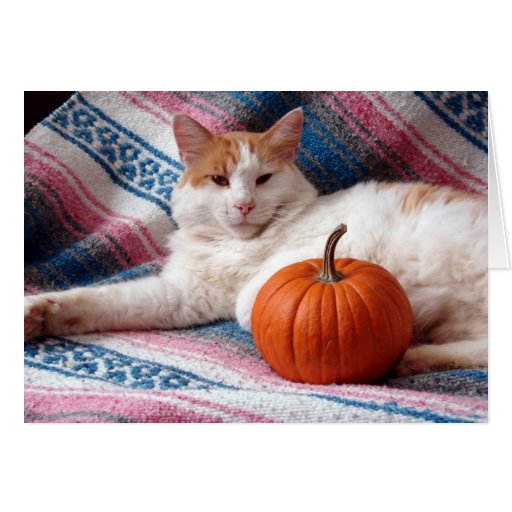 Acción de gracias del gatito tarjeta de felicitación