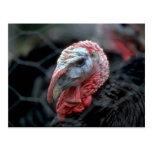 Acción de gracias Turquía Postales