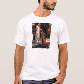 Accolade - Blue Smoke Persian cat T-Shirt