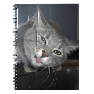 Accused_Cat,_(Part-Two),_ Spiral Notebook