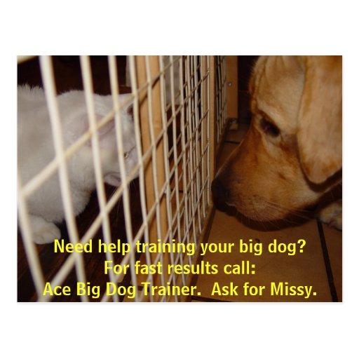 Ace Big Dog Trainer Postcard