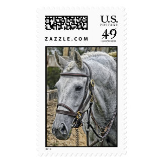 Ace the Rescue Horse from a slaugher house Postage