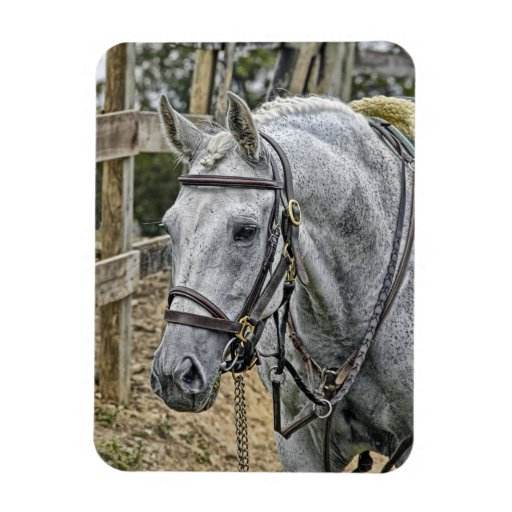 Ace the Rescue Horse Rectangular Magnet