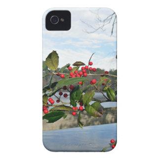 Acebo americano que muestra bayas rojas y la hoja Case-Mate iPhone 4 carcasa