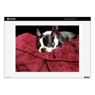Acebo de Boston Terrier Portátil 38,1cm Skins