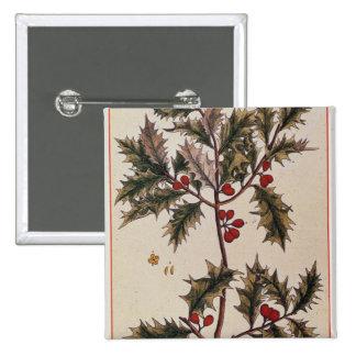 "Acebo ""de un herbario curioso"", 1782 pins"
