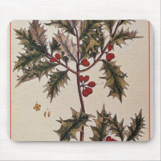 """Acebo """"de un herbario curioso"""", 1782 alfombrilla de ratones"""