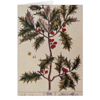 "Acebo ""de un herbario curioso"", 1782 tarjeta de felicitación"