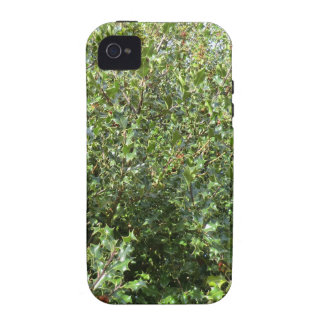 Acebo del otoño en Hednesford Case-Mate iPhone 4 Funda