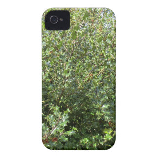 Acebo del otoño en Hednesford iPhone 4 Case-Mate Carcasas