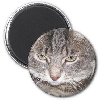 Acebo el imán del gato