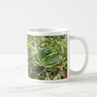 Acebo europeo taza