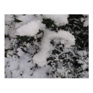 Acebo nevado tarjeta postal