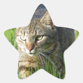 Acecho del gato del gatito pegatina en forma de estrella