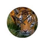 Acecho del tigre relojes de pared