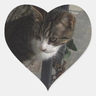 Acecho gris del gato pegatina en forma de corazón
