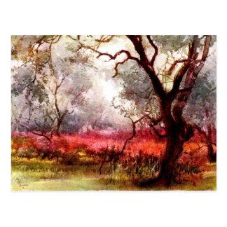 Aceituna y rosas tarjeta postal
