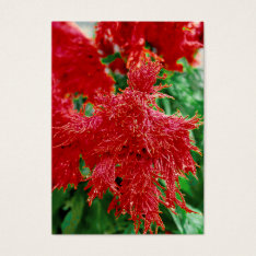 ACEO ATC Red Flower Closeup Business Card at Zazzle