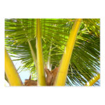 ACEO Palm Tree Business Card Templates